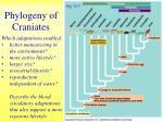 phylogeny of craniates