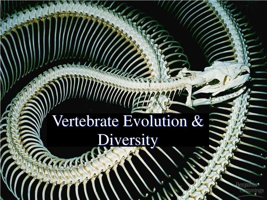 vertebrate evolution diversity l.