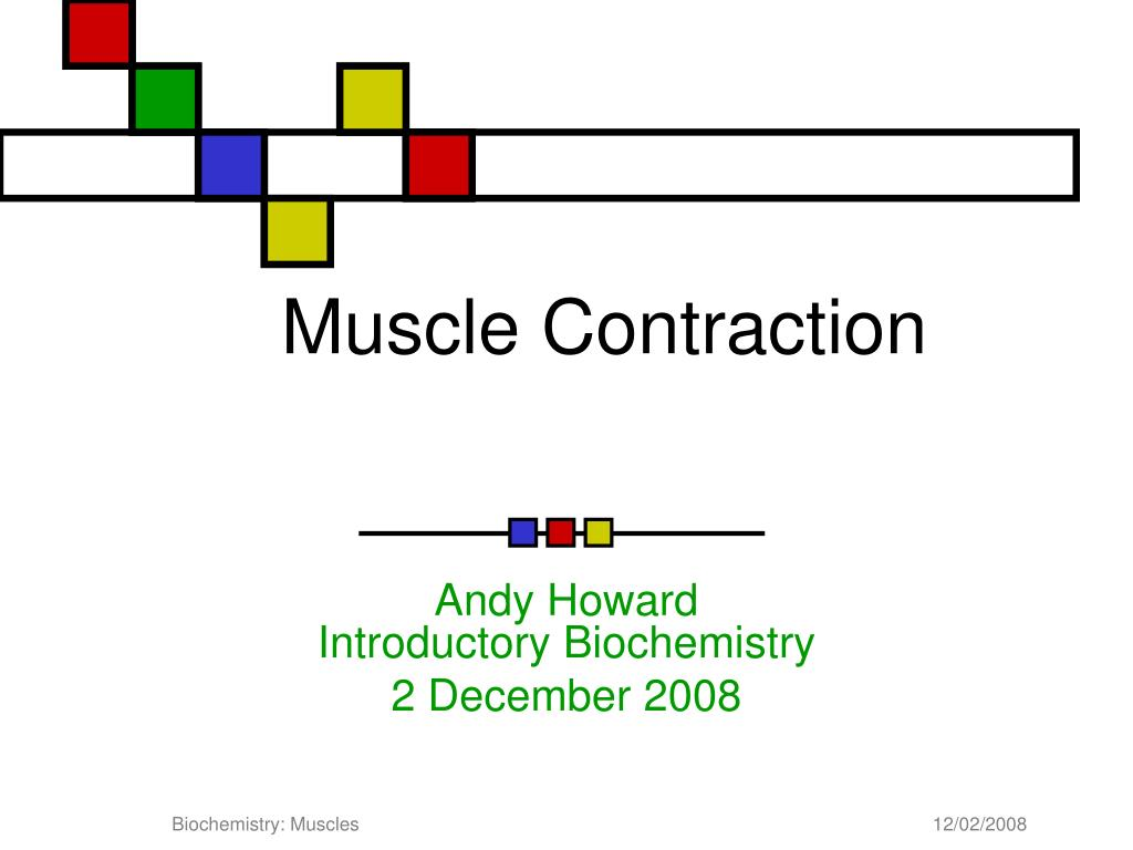 muscle contraction l.