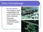 class actinopterygii40