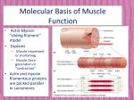 molecular basis of muscle function