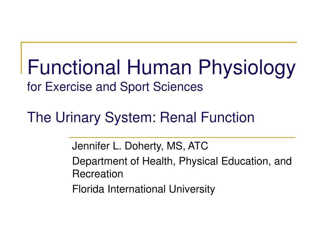 functional human physiology for exercise and sport sciences the urinary system renal function l.