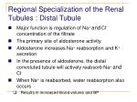 regional specialization of the renal tubules distal tubule