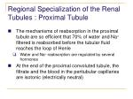 regional specialization of the renal tubules proximal tubule50