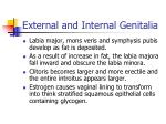 external and internal genitalia