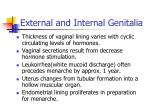 external and internal genitalia105