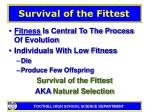 survival of the fittest14