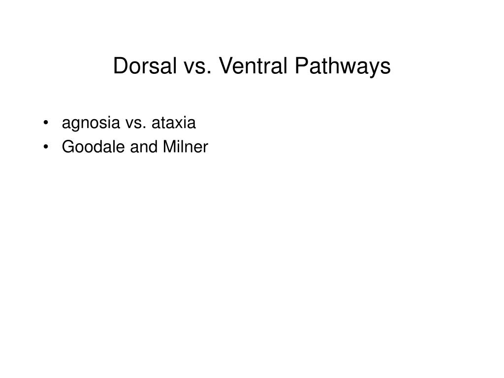 Dorsal vs. Ventral Pathways