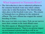 what happened to narmada river