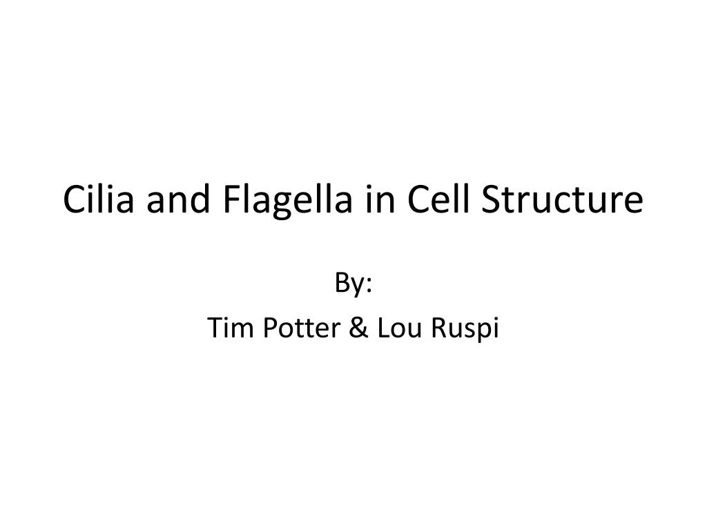cilia and flagella in cell structure l.