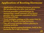 application of rooting hormone58