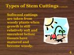 types of stem cuttings continued