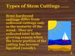 types of stem cuttings continued5