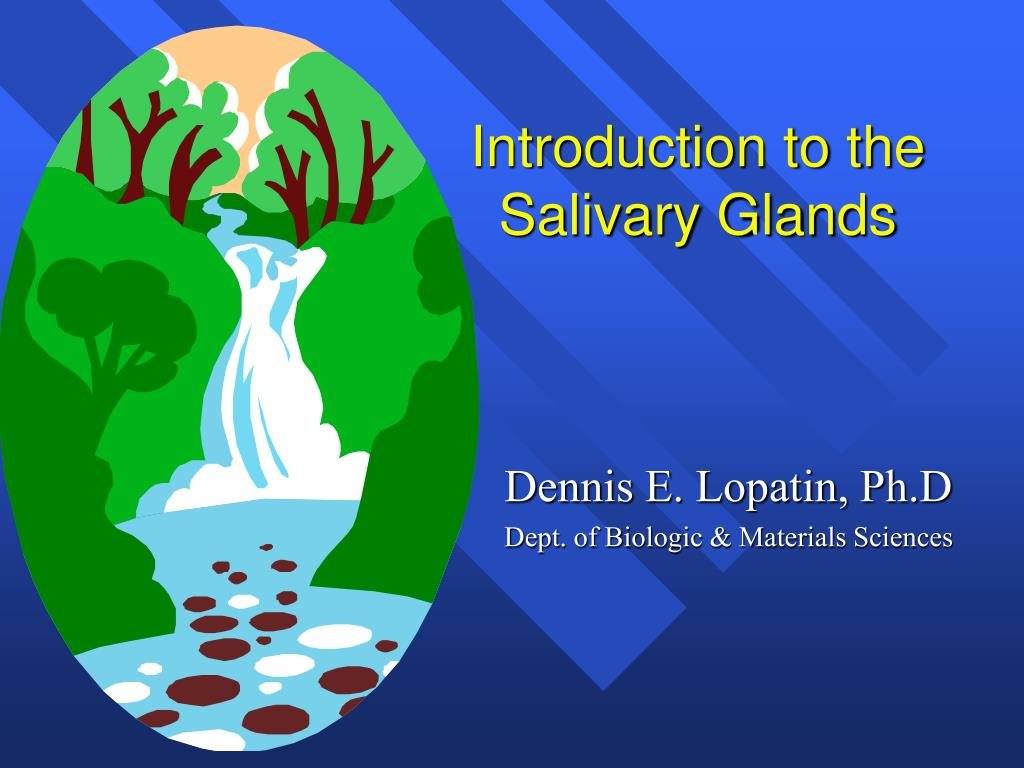 introduction to the salivary glands l.
