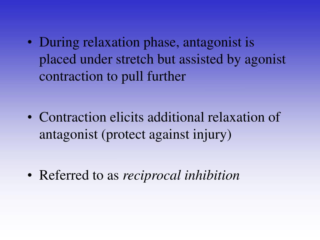 During relaxation phase, antagonist is placed under stretch but assisted by agonist contraction to pull further