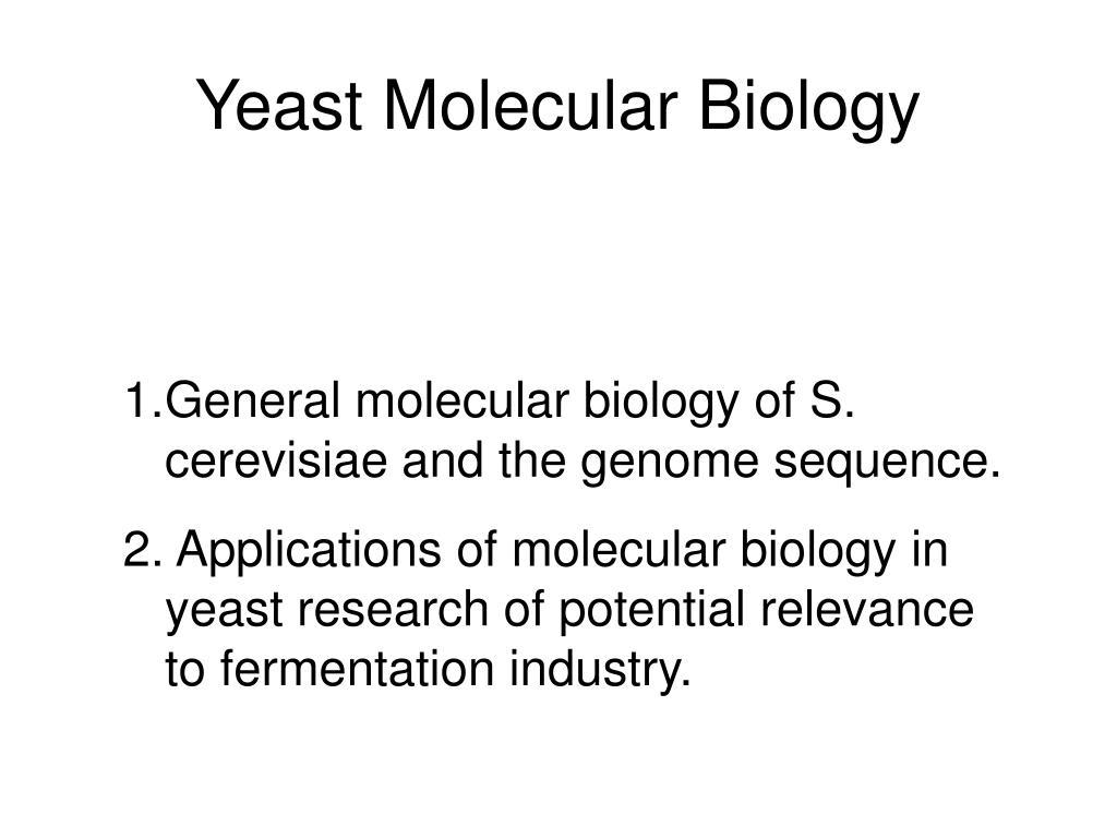 yeast molecular biology l.