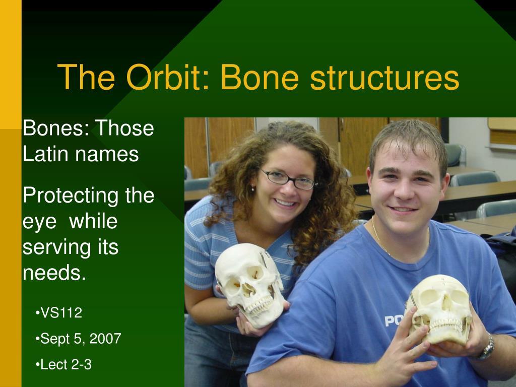 the orbit bone structures l.