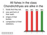 all fishes in the class chondrichthyes are alike in the