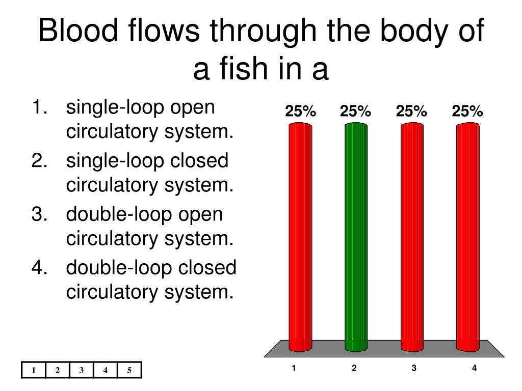 Blood flows through the body of a fish in a