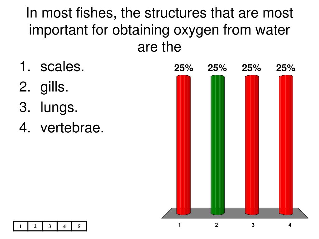 In most fishes, the structures that are most important for obtaining oxygen from water are the