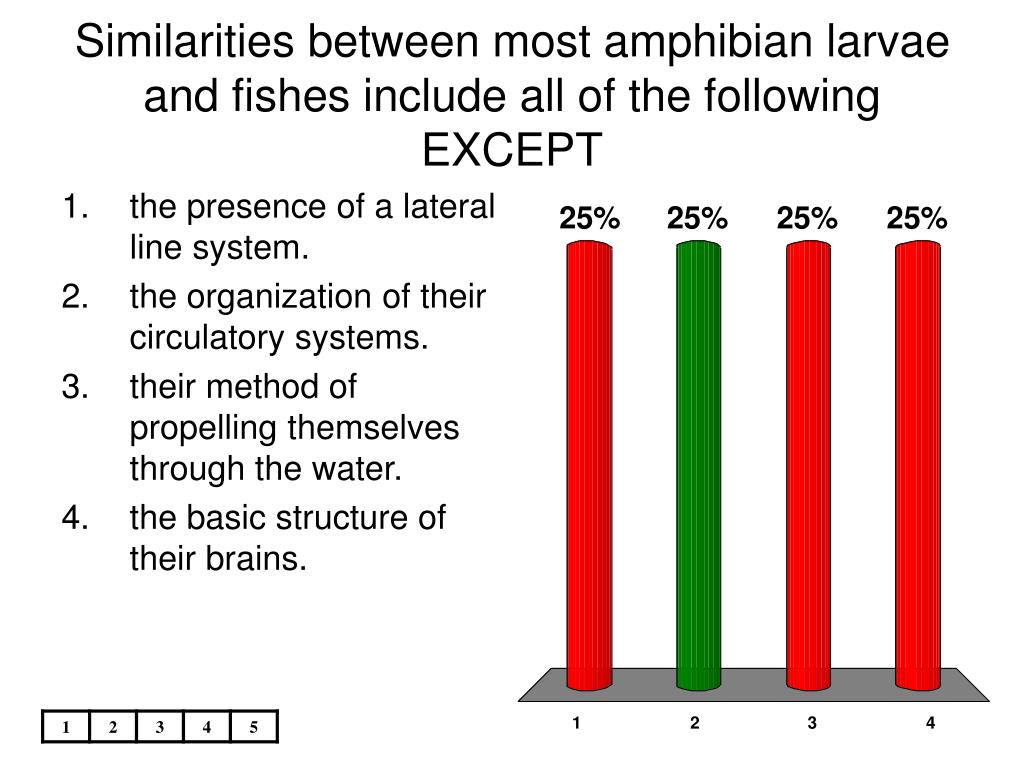 Similarities between most amphibian larvae and fishes include all of the following EXCEPT