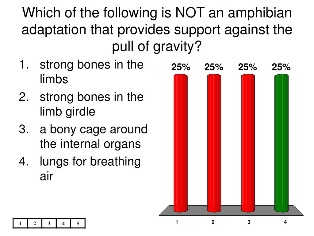 Which of the following is NOT an amphibian adaptation that provides support against the pull of gravity?