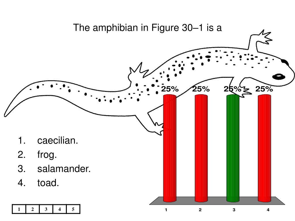 The amphibian in Figure 30–1 is a