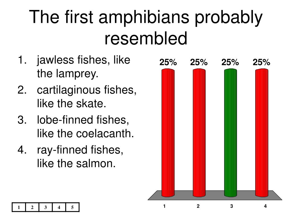 The first amphibians probably resembled