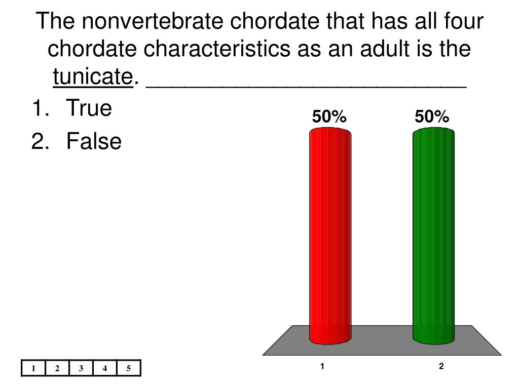The nonvertebrate chordate that has all four chordate characteristics as an adult is the