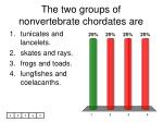 the two groups of nonvertebrate chordates are