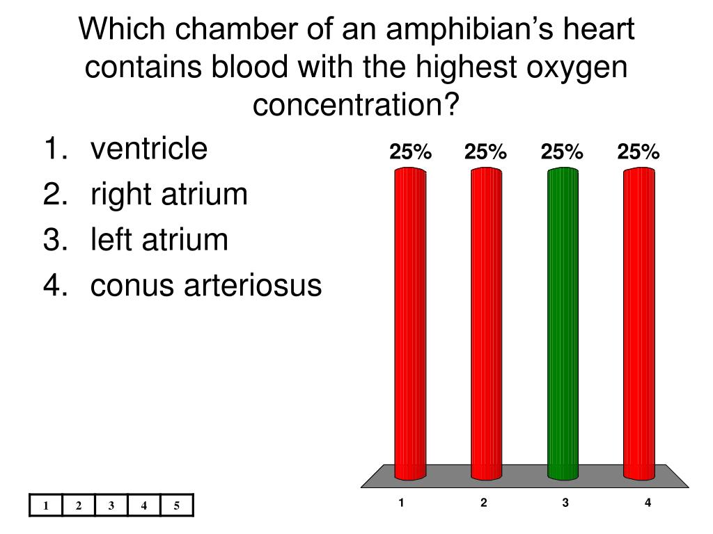 Which chamber of an amphibian's heart contains blood with the highest oxygen concentration?