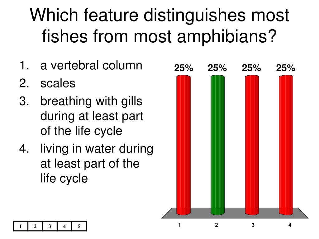 Which feature distinguishes most fishes from most amphibians?