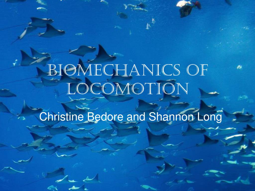 biomechanics of locomotion l.