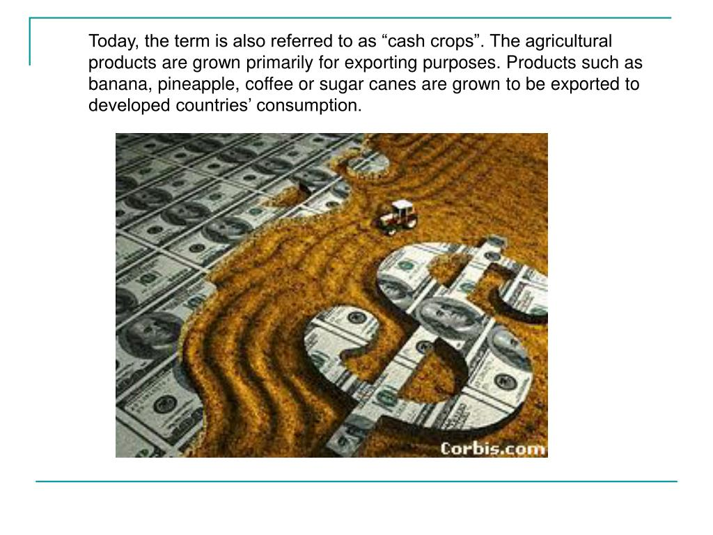 "Today, the term is also referred to as ""cash crops"". The agricultural products are grown primarily for exporting purposes. Products such as banana, pineapple, coffee or sugar canes are grown to be exported to developed countries' consumption."