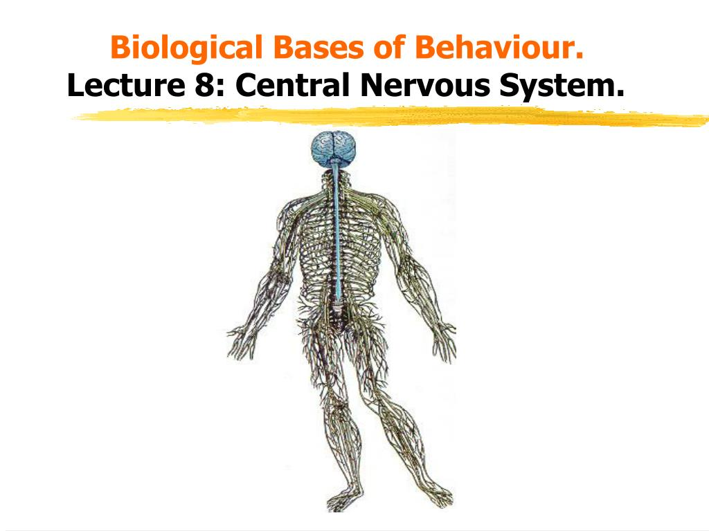 biological bases of behaviour lecture 8 central nervous system l.