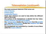 telencephalon continued