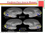 fusiform face area in humans