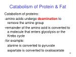 catabolism of protein fat