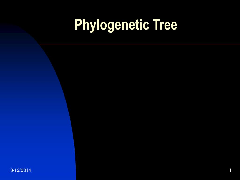 phylogenetic tree l.