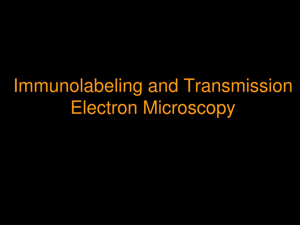 immunolabeling and transmission electron microscopy l.