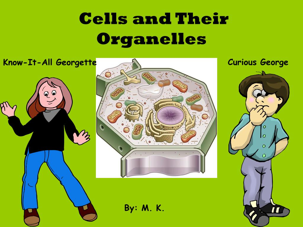 cells and their organelles l.