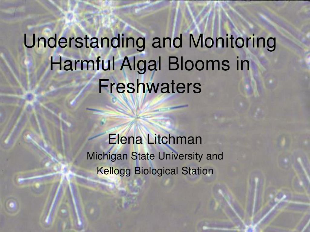 understanding and monitoring harmful algal blooms in freshwaters l.