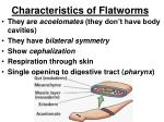characteristics of flatworms