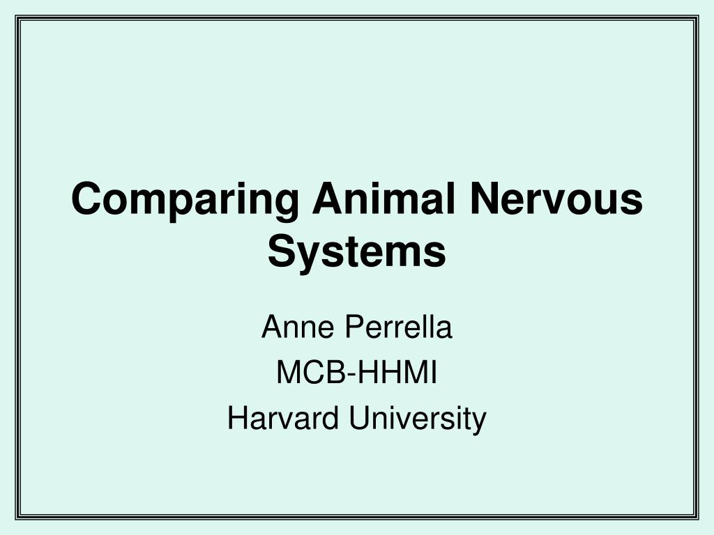 comparing animal nervous systems l.