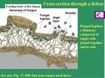 cross section through a lichen