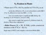 n 2 fixation in plants