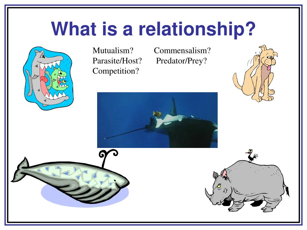 What is a relationship?