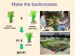 make the backcrosses
