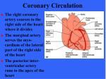 coronary circulation56