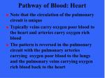 pathway of blood heart37